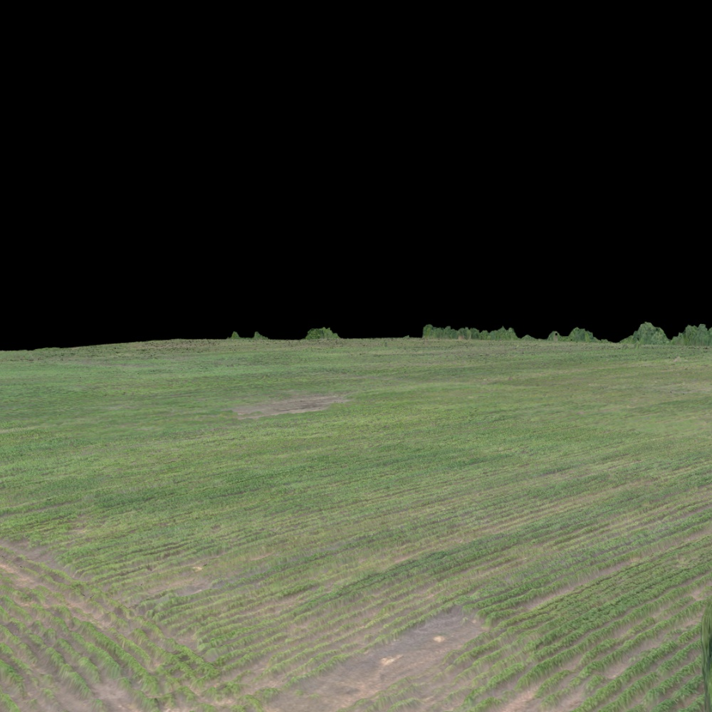 40 Acre Cotton Field 3D