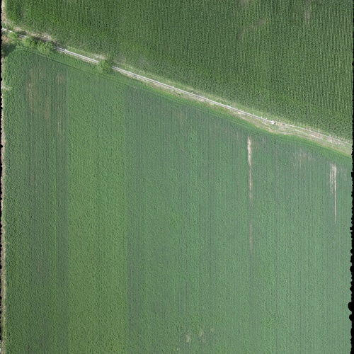 Sample Ag ortho: Corn and Alfalfa