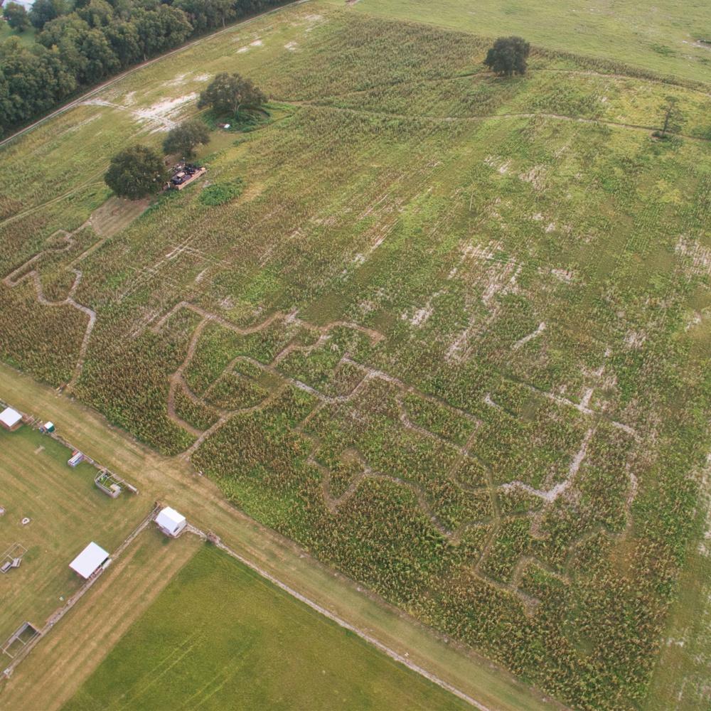 Gainesville Corn Maze