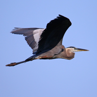 Blue Heron Aviation
