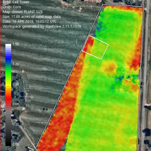 early season corn plant height survey