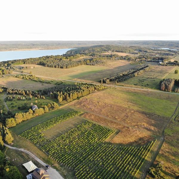 Northern Michigan Vineyard