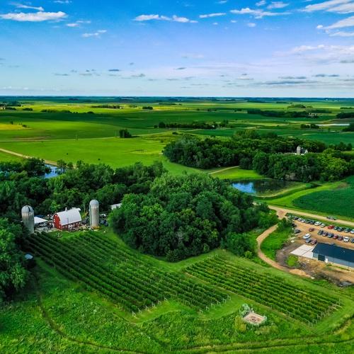 Farm Acreage and Vineyard