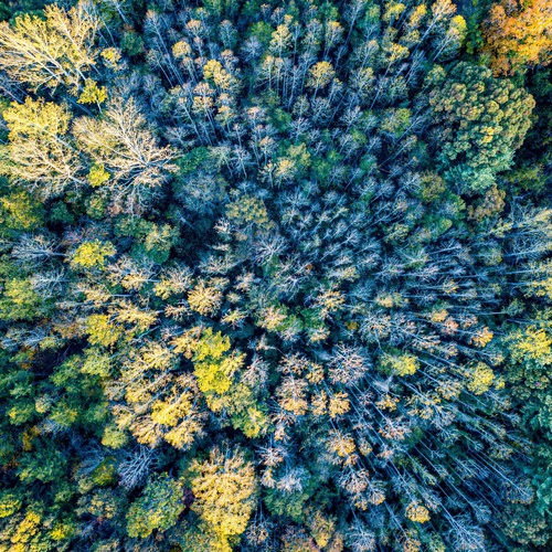 Birds eye view over forest