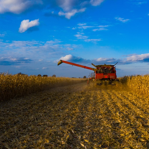 Ohio Harvest