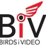 BirdsiVideo of Central Texas, LLC.
