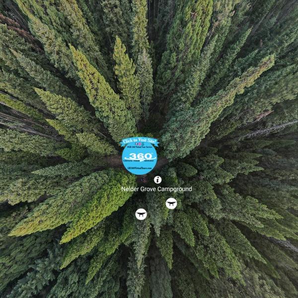 Nelder Grove in Oakhurst (Artistic Shot Above Campsite)