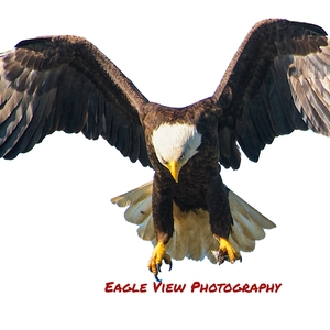 Eagle View Photography