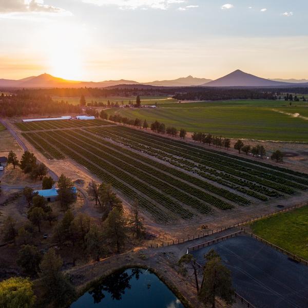Farm Real Estate Example
