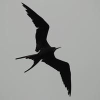 Frigate Aerial