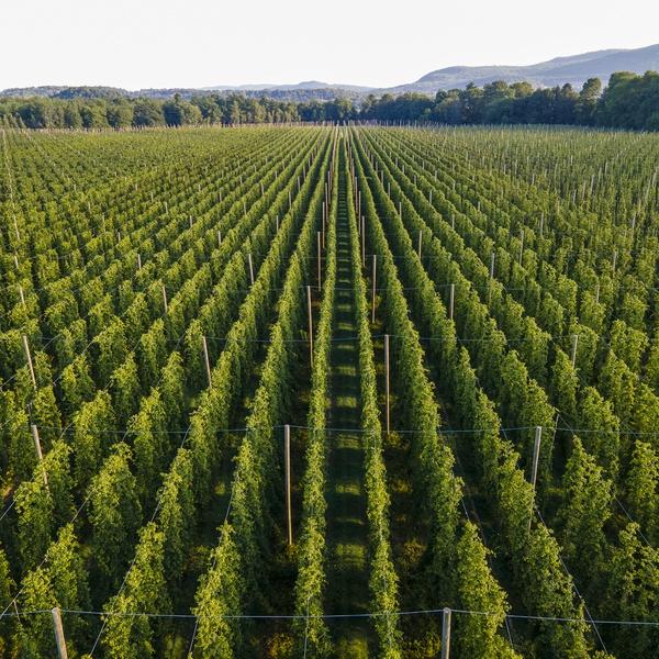 Hops Farm in Starksboro, Vermont