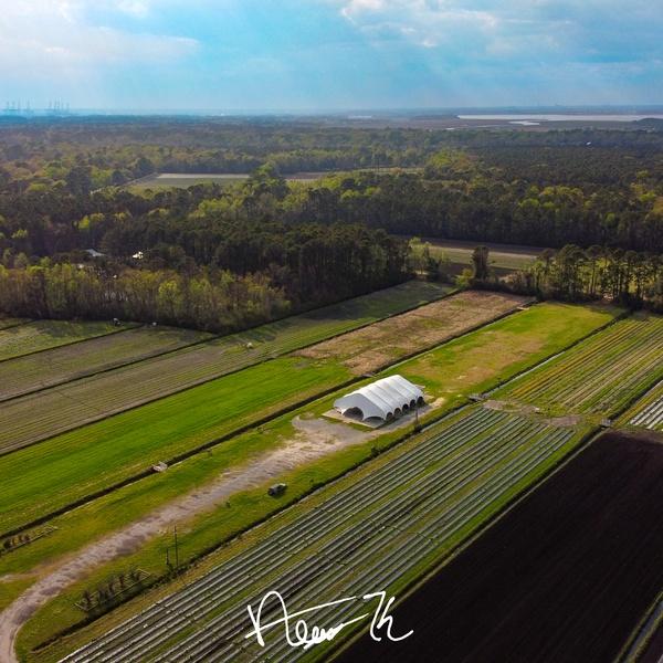 Boone Hall Farms (Charleston, SC)